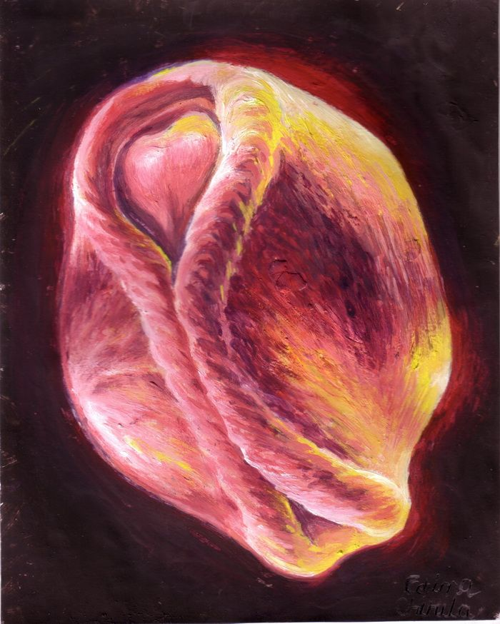 Neurula embrion pictura neurulatio embryo painting