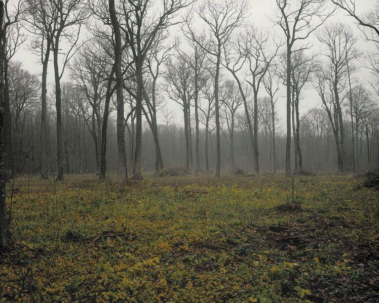 blackberry-creek-kentucky-snagov-forest-ilfov