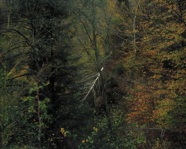 grapevine-creek-detail-i-w-virginia-barsa-fierului-brasov
