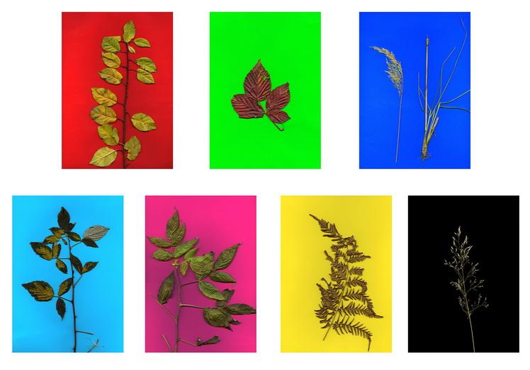 plants-from-barsa-fierului-za%cc%86rnesti