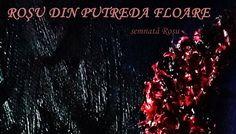 Afis Rosu din putreda floare2